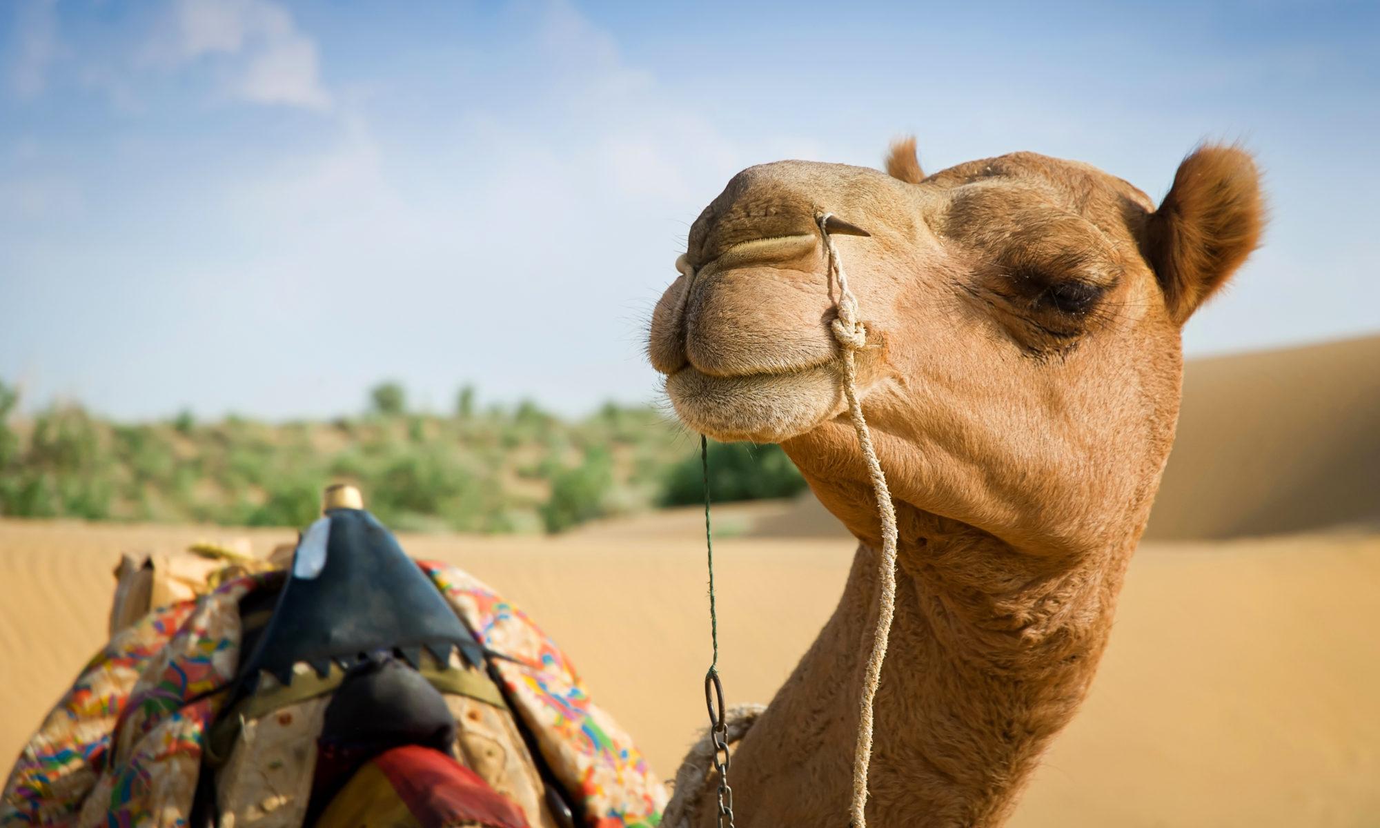 The Camel Way